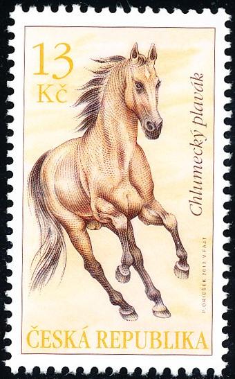 Koně - Chlumecký plavák