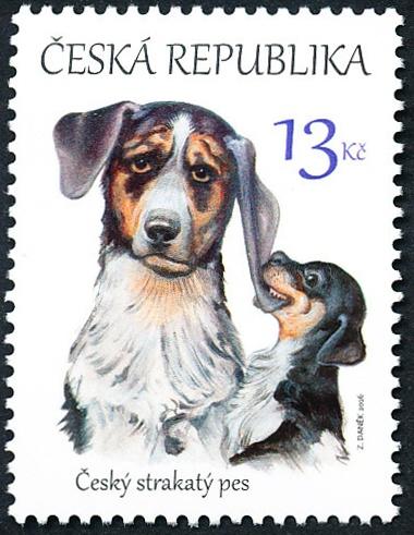 Štěňata - česká národní plemena psů: Český strakatý pes