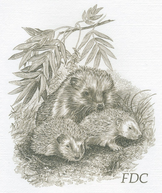 Zvířecí mláďata - Křeček polní