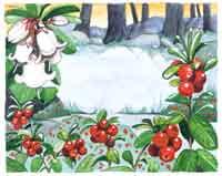 Äland (Alandské souostroví) 2/2004