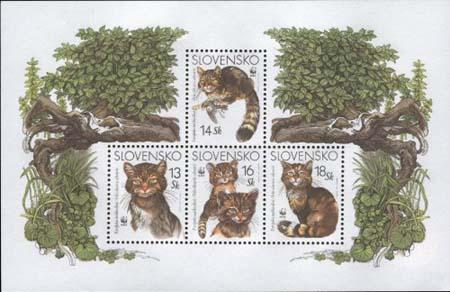 Aršík - Európska mačka divá