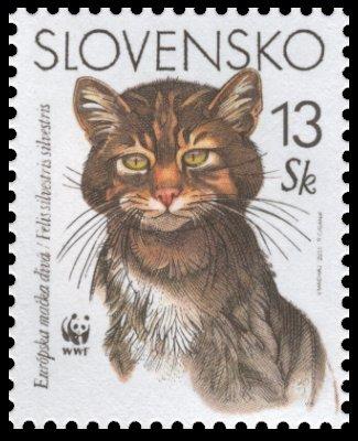 Európska mačka divá - 13 Sk