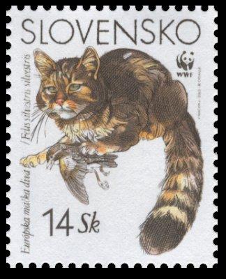 Európska mačka divá - 14 Sk
