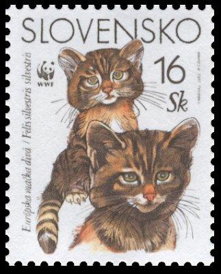 Európska mačka divá - 16 Sk