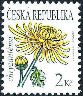 Krása květů - Chryzantéma