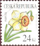 Krása květů - Narcis