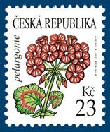 Krása květů - Pelargonie