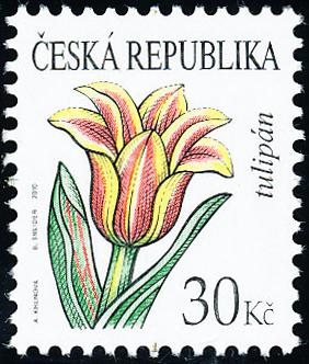 Krása květů - Tulipán 30 Kč