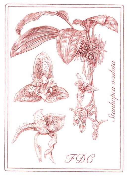 Pěstitelství - krása orchidejí