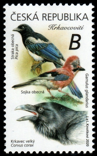 Zpěvní ptáci v našem okolí - Krkavcovití